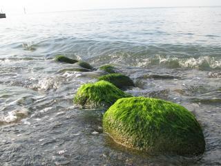 обои Наше черное море фото