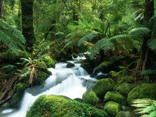 обои Летний лесной ручей в Австралии фото