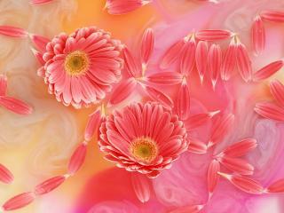 обои Цветы для дорогой жены фото