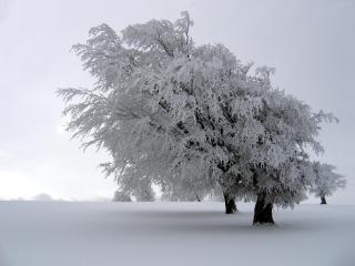 обои Дерево на пустыне снега фото