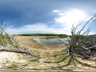 обои Мёртвая местность, усеянная корягами фото