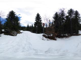 обои Дорога среди снежного леса фото