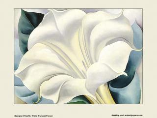 обои Джорджия О'Киф - White Trumpet Flower фото