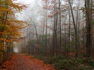 обои для рабочего стола: Осенний парк
