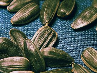 обои Подсолнечные семечки фото