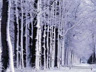 обои Спящие под снегом аллеи фото