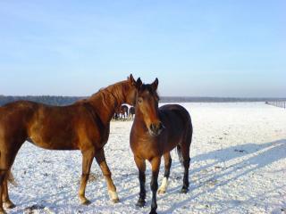 обои для рабочего стола: Красивые лошади