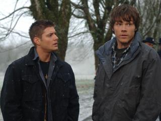 обои Сверхъестественное дин и Сэм у дерева фото