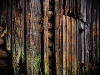 обои Остатки дерева фото