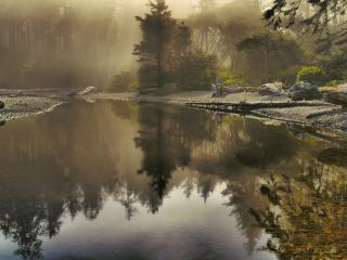 обои Мрачный но красивый болотистый водоём фото