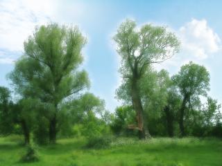 обои Весенний лес фото