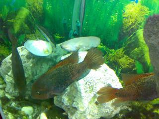 обои Рыбки в аквариуме фото