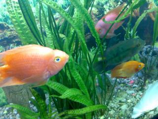 обои Красивые рыбы фото