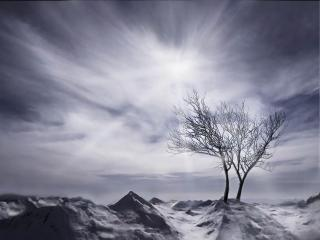 обои Два деревца в пустынном пейзаже зимы фото
