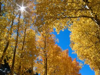 обои Солнце среди осеннего убора леса фото