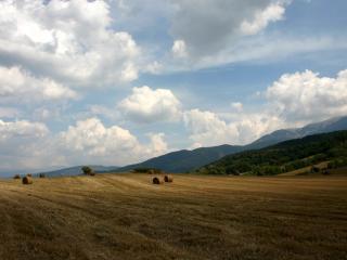 обои Стоги сена на золотом поле жизни фото
