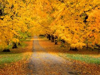 обои Осенний листопад фото