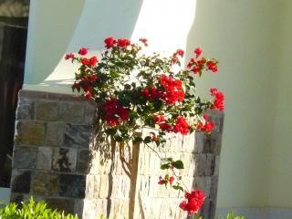 обои Египетский цветок фото