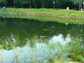 обои Небольшое озеро в парке фото