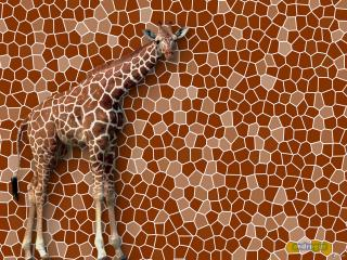 обои Большой Жираф фото