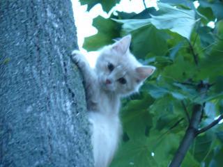 обои Котенок на дереве фото