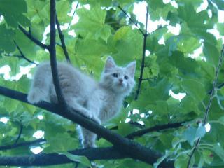 обои Котенок на дерево залез фото