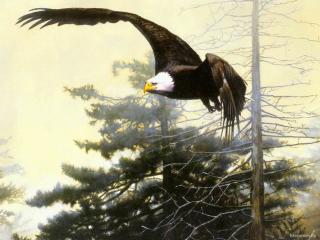 обои Орел охотится в лесу фото