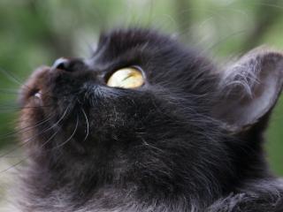 обои для рабочего стола: Крупный план кошки