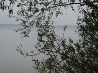 обои Море сквозь ветки фото