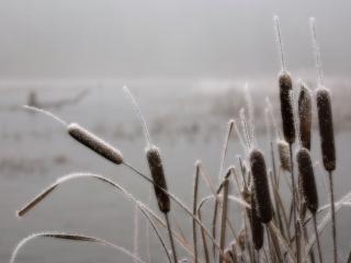 обои Камыши на озере фото