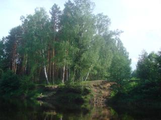 обои Лес у речки фото