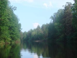 обои Красивейший лес и река фото