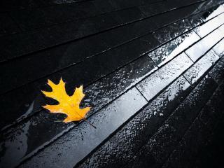 обои Осенний лист на мокрых досках фото