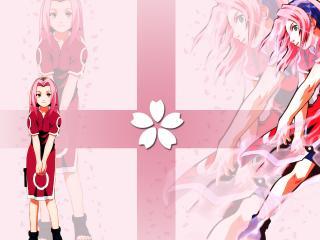 обои Сакура на розовом фоне фото