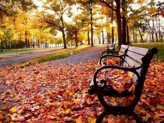 обои Парк осенью фото