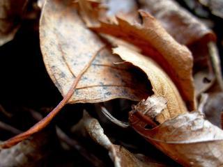 обои Сухая листва фото
