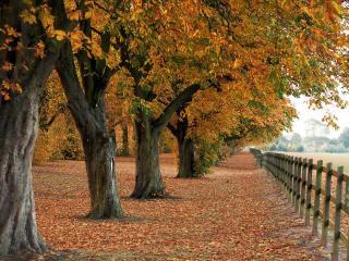 обои Осенний заповедник фото