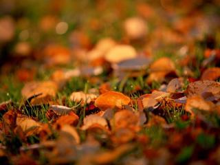 обои Натюрморт из листвы фото