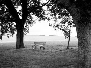 обои Одинокая лавочка среди двух старых деревьев фото