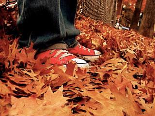 обои Опала вся листва фото