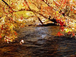 обои Дерево в осенней листве склонилось над рекой фото