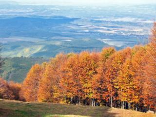 обои Деревья покрылись осенней листвой на склоне фото