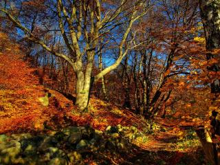 обои Осенний овраг фото