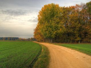обои Дорога вдоль зеленого поля и деревья по краю фото