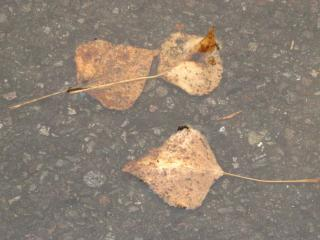обои Осенние листья в луже фото