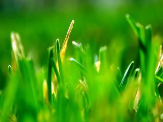 обои Рост травы фото