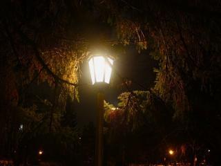 обои Свет фонаря в еловых ветках фото