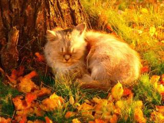 обои Рыжий осенний кот