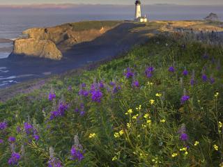 обои Орегон, маяк на побережье фото