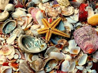 обои Морские ракушки фото